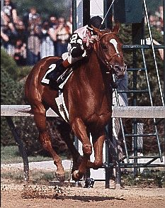 Affirmed:  1978 Triple Crown winner, the last to date (April 2013). We need another, perhaps this year?