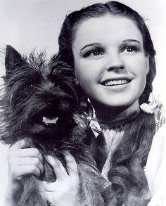 Toto, het hondje van Dorothy in de Wizard of Oz / De tovenaar van Oz kom je tegen in diverse films en boeken.  http://www.bzof.nl/zoeken/?query=wizard+of+oz