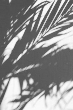 silhouette of palm tree photo – Free Black-and-white Image on Unsplash Shadow Pictures, Grey Pictures, Gray Aesthetic, Black And White Aesthetic, Aesthetic Photo, Photo Wall Collage, Picture Wall, Photos D'ombre, Black And White Photo Wall