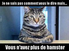 Confession de chat