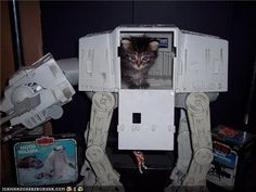 I love cats, and I love Star Wars. Here are some of my favorite pictures that combine the two. Funny Cat Memes, Funny Cats, Funny Animals, Cute Animals, Crazy Cat Lady, Crazy Cats, Kittens Cutest, Cats And Kittens, Newborn Kittens