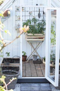 Hydroponic Plants, Hydroponics, Potted Plants, Garden Plants, Garden Compost, Gardening, Garden Cottage, Fruit And Veg, Conservatory