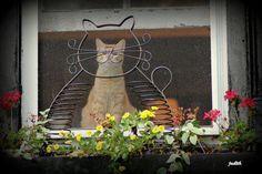 smiling cat!   =^..^=