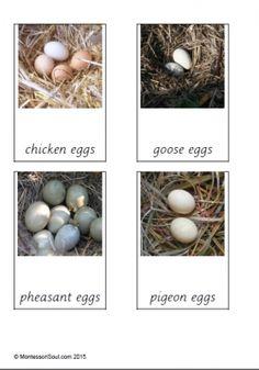 Free montessori cards looking at birds and their eggs. Montessori Science, Preschool Science, Kindergarten Inquiry, Science Inquiry, Preschool Eggs, Nester, Spring Birds, Animal Habitats, Animals
