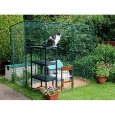 Outdoor Walk In Cat Run Enclosure: Amazon.co.uk: Pet Supplies may have to get b to build on