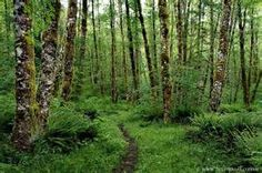 Portland Forest - Bing images