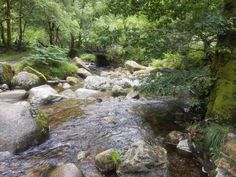 A picture of a stream somewhere in the Wicklow Mountains in Ireland taken shortly before I slipped on the rocks and fell into the water.