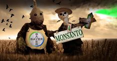 It is undoubtedly said that non-GMO movement gets a bad rap from mainstream media – if at all, any coverage. That said, the NY Times have done the opposite. Voice Chat, Best Vpn, Dashcam, Orange, Ny Times, Decir No, Politics, Make It Yourself, Mainstream Media
