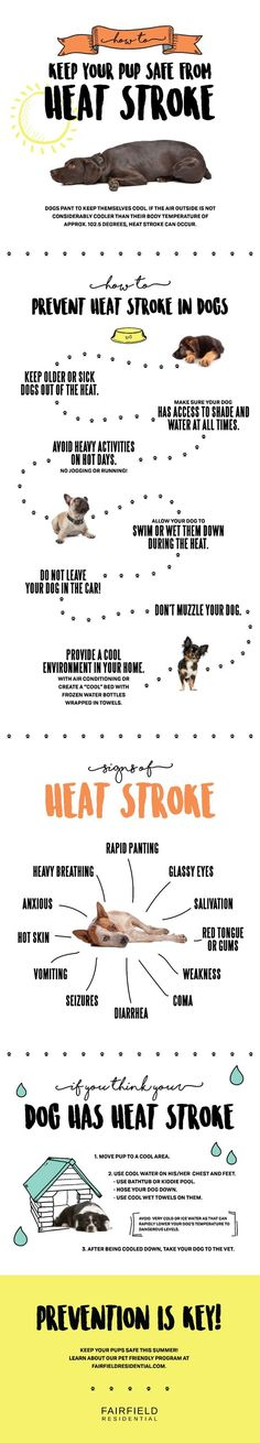 How to Prevent Heat Stroke in Dogs - Fairfield Residential - Take care of your pup in the summer heat. Pet Care Tips, Dog Care, Pet Tips, Heat Stroke In Dogs, Game Mode, Sick Dog, Dog Training Tips, Safety Training, Potty Training