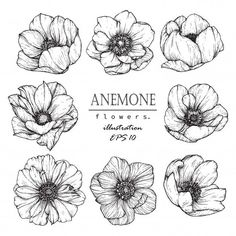 Anemone flowers drawing illustration vector and clip-art. Anemone flowers drawing illustration vector and clip-art. The post Anemone flowers drawing illustration vector and clip-art. appeared first on Diy Flowers. Art Floral, Floral Drawing, Drawing Flowers, Flower Drawings, Flower Design Drawing, Art Flowers, Exotic Flowers, Flowers Garden, Fresh Flowers