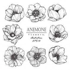 Anémone Feuille Et Fleur Dessin | Télécharger maintenant des vecteurs Premium sur Freepik : Anémone feuille et fleur dessin Vecteur Premium #Anémone #Feuille #Fleur