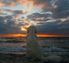 So much beauty in the world by Ingrid0804, via Flickr