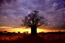 Tree Of Life With Images Landscape Nature Images Nature Photography