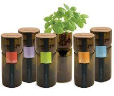 Blog Medioambiente.org Allpe Medio Ambiente: Cómo convertir una botella de vino en un elegante jardín