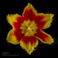 Star flower by NickSW