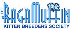 ragamuffin breeders, ragamuffin kittens for sale, ragamuffin kittens Ragamuffin Kittens, Kitten For Sale, Heart Melting, Amazing, Animals, Animales, Animaux, Animal, Animais