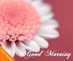 30 best good morning images on pinterest good morning sunshine good morning greetings best animation good morning greetings free download m4hsunfo