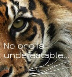 No one is undefeatable