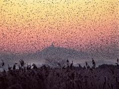 somerset levels - Google Search