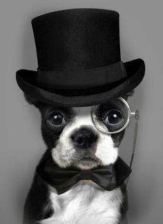Le chien gentleman
