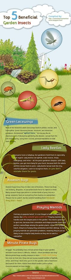 Top 5 Beneficial Garden Insects [Infographic]