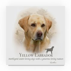 Howard Robinson ' Labrador' Canvas Art