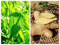 Pe lângă conținutul foarte bogat în nutrienți, urzicile au proprietăți medicinale nebănuite. Sunt imunostimulatoare, fortifiante, depurative și antiinflamatoare. Stuffed Mushrooms, Vegetables, Teas, Health, Garden, Plants, Stuff Mushrooms, Garten, Health Care