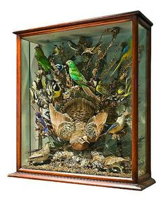 Victorian taxidermist's display case, including an eastern