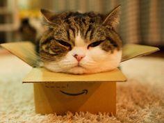 Maru kitty in a tiny box