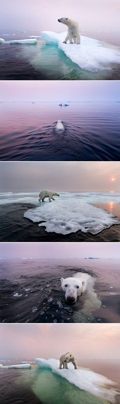 Polar Bear, Manitoba -- Travel 365