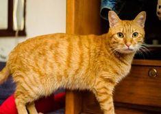 Look at miii. . . . #cats #cat #catlover #catsofinstagram... Follow us on Instagram :D #cats #cat #catlover #lovecats #funny #fun #cute #socute #feline #felines #felinefriend #fur #furry #paw #paws #kitten #kitty #kittens #kittycat #kittylove #fluffy #fluff