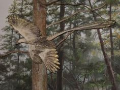 A recreation of the feathered dinosaur Microraptor flying through the trees. From Flickr user Cryptonaut.