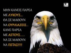 Fly Free like an eagle...