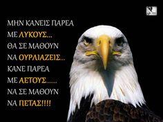 Fly Free like an eagle...