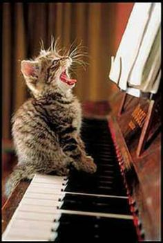 I would actually due if a cat was on my piano but the picture is cute