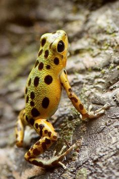 Frog with spots