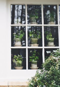 potted plants in a window | houseplants