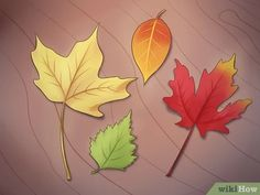 6 Ways to Preserve Fall Leaves - wikiHow Leaf Crafts, Fall Crafts, Diy And Crafts, Autumn Leaves Craft, Fall Leaves, Couronne Diy, Deco Nature, Dry Leaf, Fall Nail Designs