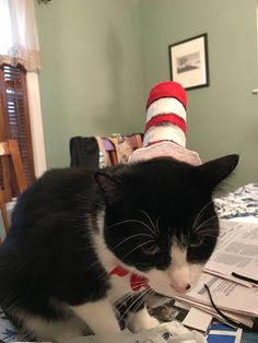 The Unhappy Cat in the Hat http://ift.tt/2z4yMRU cute puppies cats animals