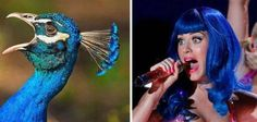 celebrities-and-their-animals-look-a-likes-15