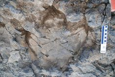 Huge Trove of Dinosaur Footprints Discovered in Al …RocksInMyHead™ is the World's Greatest Rock, Prospecting & Outdoor Education Company.   For gold prospecting, rockhounding, lapidary and geology tools, and jewelry making supplies, equipment, books, maps, great outdoor gear, plus lots of great rocks, minerals, fossils, & meteorites, go to our website http://RocksInMyHead.com.