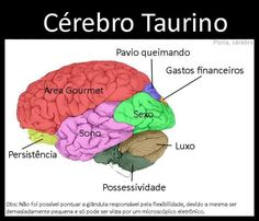 Ilustrações mostram como seria o (provável) cérebro de cada signo | Catraca Livre