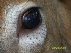 82 whitetail reference photos....eyes, ears, nose & shedding velvet