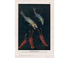 1932 DEEP SEA FISH & ocean creatures print by antiqueprintstore