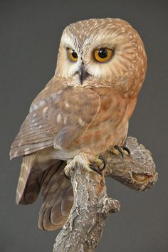 Heey sweetie show me some Love Owl Photos, Owl Pictures, Wooden Feather, Saw Whet Owl, Soapstone Carving, Wood Carving Art, Beautiful Owl, Art Carved, Owl Bird