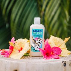 Skin Therapy for Pooches. Our Island Mango dog shampoo is all natural, lightly scented and gentle. Your best friend will love it... and so will you! 8.5 oz A hypo-allergenic, natural formula with a blend of organic botanical extracts designed to help maintain a shiny coat, relieve itchy, irritated skin, deodorize, and leave your pooch smelling amazing. Infused with Omega 3 fatty acids- rich Kukui nut oil, Poi Dog shampoo assists in reducing shedding and combatting dermatitis-induced hot spots. W Best Dog Shampoo, Hot Spots, Omega 3, Fleas, Deodorant, Shea Butter, Biodegradable Products, Bath And Body, Mango