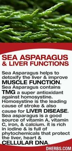 Diet Food Sea Asparagus helps to detoxify the liver & improve muscle function. Sea Asparagus contains TMG a super antioxidant against homosystine. Natural Medicine, Herbal Medicine, Natural Cures, Natural Health, Healthy Tips, Healthy Choices, Healthy Food, Health And Nutrition, Health And Wellness