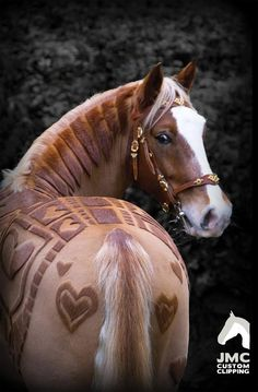 Humans are always doing strange and interesting things to their hair, but JMC Equestrian Driving & Custom Clipping based in England has decided it's time for horses to get in on the fun too. It only makes sense, considering animals also need a trim every now and again. The business is giving ...