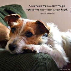 Sometimes the smallest things take up the most room in your heart. <3