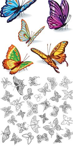 2 sets with vector butterflies templates. One set is with colored vector butterflies and another one is with black and white butterflies (outlines) which can be Butterfly Template, Butterfly Crafts, Butterfly Art, Butterfly Pattern, Colouring Pages, Adult Coloring Pages, Coloring Books, Zentangle, Free Vector Graphics